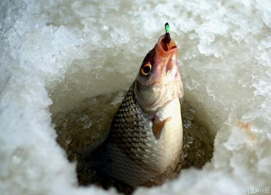 Где ловиться рыба в днепропетровске? Рыбу запретят просмотров На какие