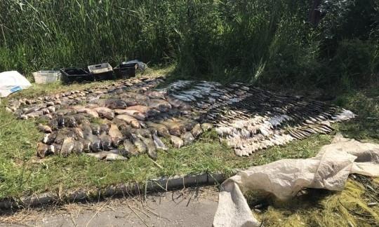 На Днепропетровщине задержали браконьера